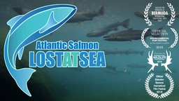 Atlantic Salmon: Lost at Sea - Fighting to Save Endangered Salmon